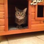 Luxury Cat Boarding